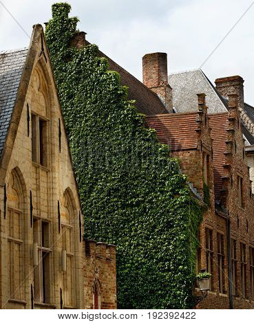 Old Medieval Houses with Wall of Ivy against Cloudy Sky Outdoors. Bruges Belgium