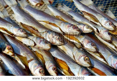 Dry Mullet Fish In Sunlight