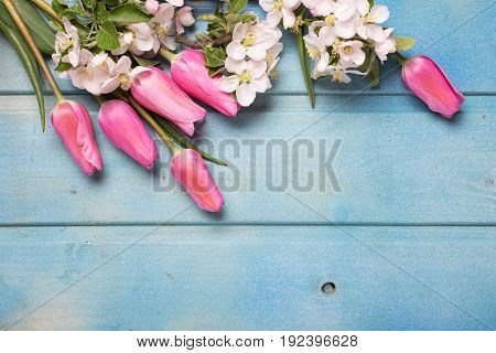 Border from apple tree flowers and pink tulips on blue wooden background. Place for text. Selective focus. Top view.