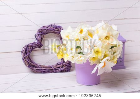 Spring narcissus or daffodils flowers in violet pot lantern and decorative heart on white wooden background. Selective focus.