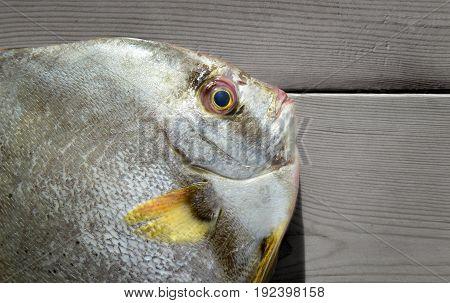 Fresh Round Batfish From Fishery Market