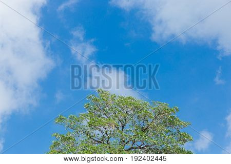 Green trees and blue sky and cloud background.
