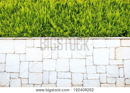 Wall of white marble bricks and spruce. Background.