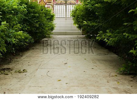 COLOR PHOTO OF PAVEMENT WITH PLANTS, STOCK PHOTO