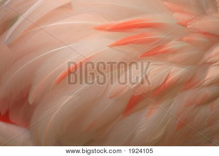 Featherdetail5