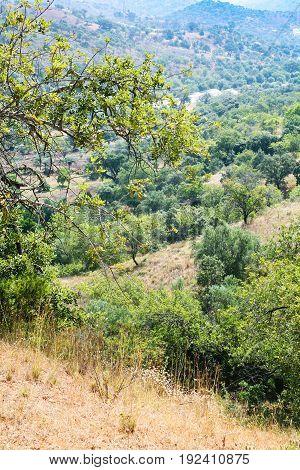 Slopes Of Serra Do Caldeirao Mountains In Portugal