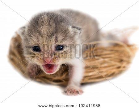 Newborn kitten in a basket on a white background .