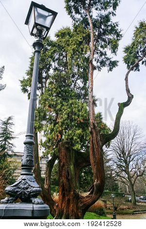 Lantern And Greet Tree In Urban Park In Florence