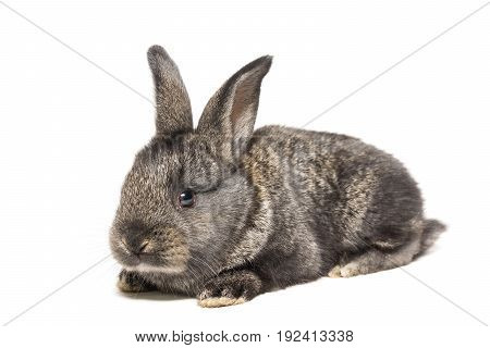 The picture shows a rabbit on a white background