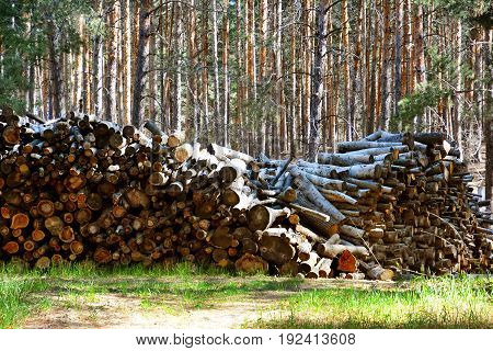 Firewood. Store firewood. Wood burned as fuel.
