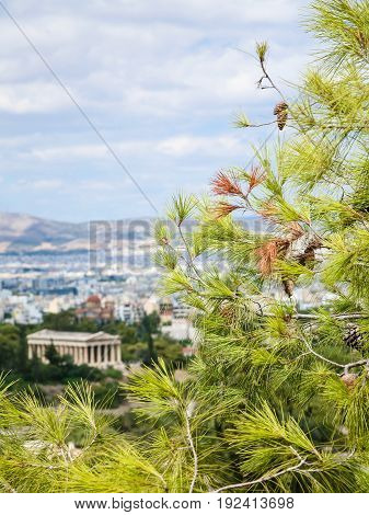 Green Twig And View Of Temple Of Hephaestus