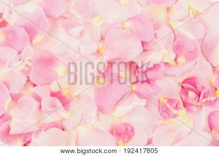 Pink rose petals. Flat lay, top view. Background of petals