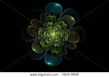 Floral fractal Generated By A Computer At random