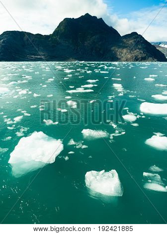 Icebergs float in the ocean just calved off local glaciers