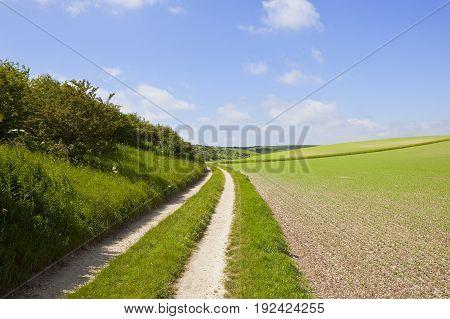 Scenic Curving Farm Track
