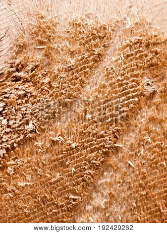 close up rough texture of a wooden post surface outside in light construction and building materials diy