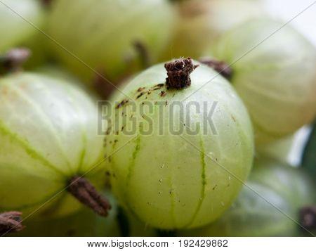 green gooseberries close up fresh produce yum