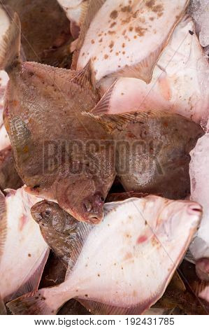 Fresh baltic flounder at the fish market