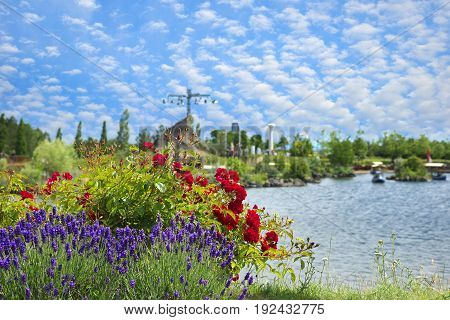 Flowers of roses and lavender against the background of summer amusement park