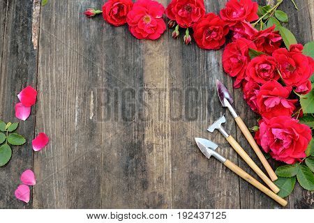 Florist vintage gardening set with red roses and tools on wooden table. Flat lay, frame
