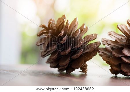 Closeup of pine cone on a wooden table natural background. spring season.