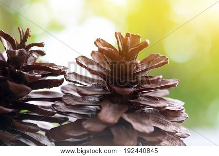 Closeup of pine cone on a wooden table natural background