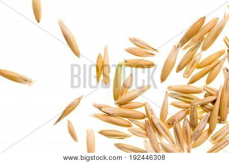 Grain of oats isolated on white background .