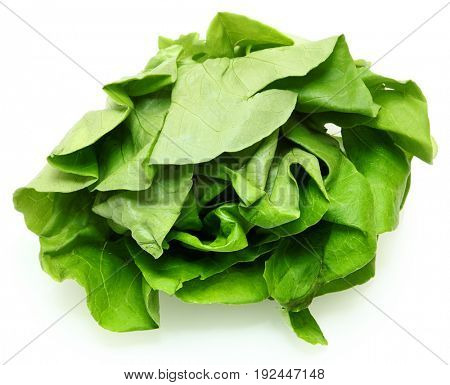 Buttery Lettuce Head Over White with Shadow
