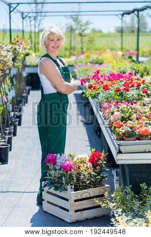 Professional gardener at work in a nursery. Attractive blonde garden expert.