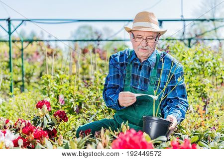 Senior gardener selecting a potted tree in the gardening center. Active retirement and gardening concept.