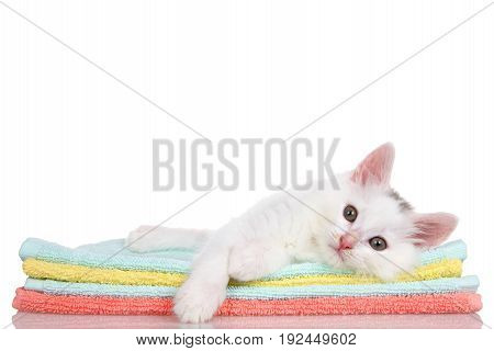 Fluffy white kitten laying on colorful orange teal and yellow blankets stacked paw over the side looking slightly to viewers left. Isolated on white background.