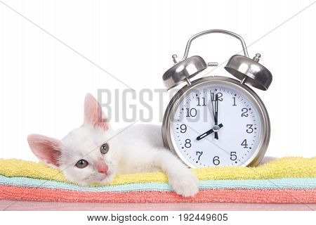Fluffy white kitten laying next to a clock set to 8 o'clock on colorful orange teal and yellow blankets stacked looking slightly to viewers right isolated on a white background. Paw hanging over.