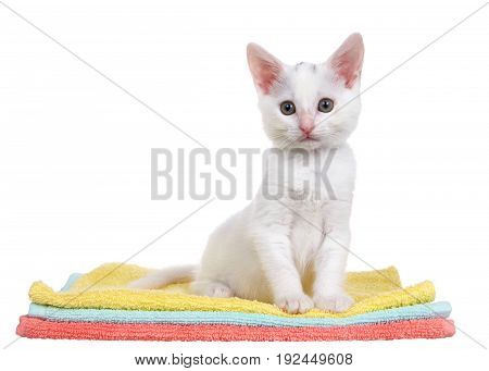 Fluffy white kitten sitting on colorful orange teal and yellow blankets stacked looking slightly to viewers left isolated on a white background.