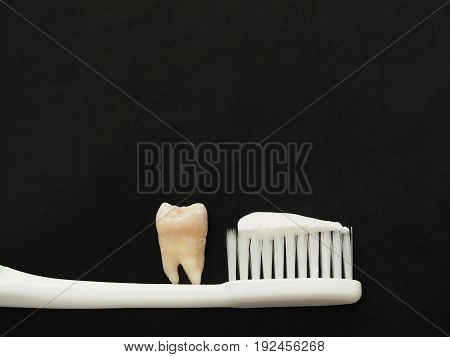 Real tooth on white toothbrush with toothpaste on black background. Good healthy teeth concept.