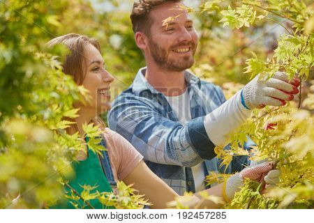 Male and female professional gardeners working and cutting branches and leaves of plants in the garden together.