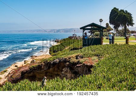 LA JOLLA, CALIFORNIA - JUNE 16, 2017:  People enjoying the ocean view from an observation point on a cliff surrounded by ice plants, with a squirrel looking on at La Jolla Cove.