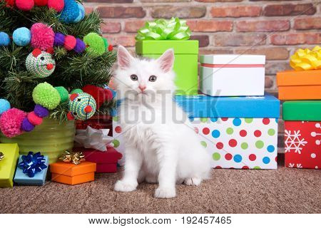 Fluffy white kitten sitting on brown carpet next to small christmas tree with yarn ball and toy mice decorations surrounded by colorful presents with bows. Looking directly at viewer.