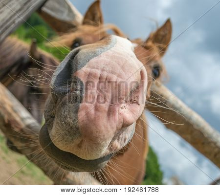 Close up photo of horse nose on the ranch