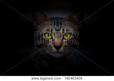 Cat in the dark night,yellow eyes of cat