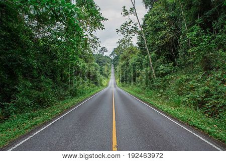 Road between green trees on a summer day