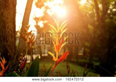 Bird Of Paradise Flower With Sunlight