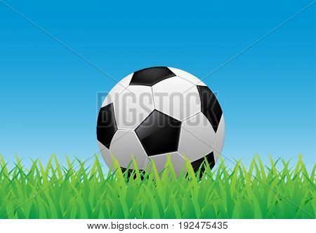 soccer ball on green grass and blue sky