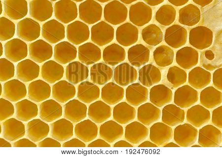 Honeycomb from a bee hive filled. Background texture of honeycomb