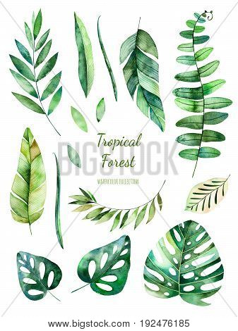 Handpainted watercolor floral elements, watercolor leaves, branches