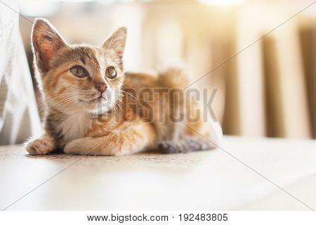 Orange tabby cat is sitting on the ground with sunlight. Cute little kitten portrait.