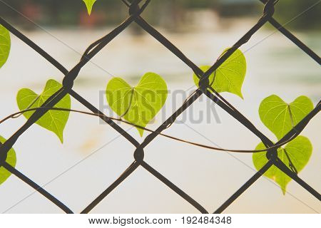 Romantic tree shape with heart shaped leaves green leaf heart shape.