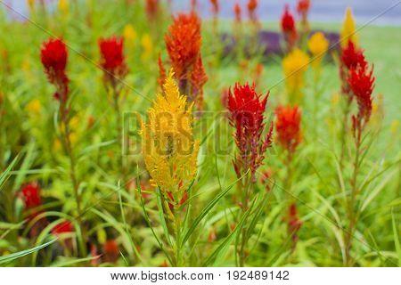 Tropical plant  foliage plants of Southeast Asia