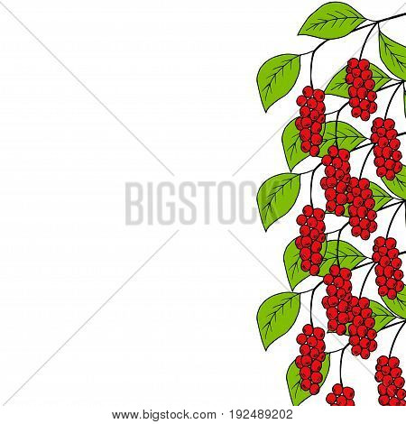 Branch with berries of Chinese Schisandra, in color, isolated on white. One of the best adaptogen herbs for stress relief. Decorative border, template.
