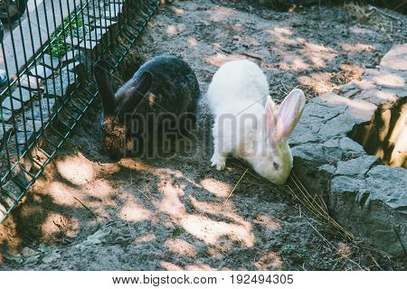 white and black rabbit in a cage eating