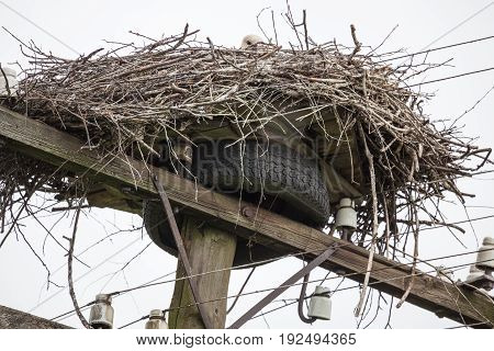 Nest of white storks at top of a cable column with wires against the background of the light blue sky